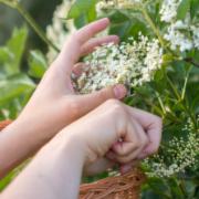 kwiatyczarnegobzu