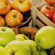 jablkaodmiany